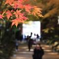 写真: 醍醐寺 171202 06