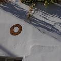 Photos: ドーナッツが飛んだ♪