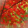 Photos: 「紅葉」です・・・・・・