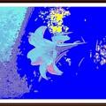 Photos: 「百合の画像を・・絵画風に・・」