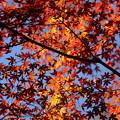 写真: 名残の紅葉