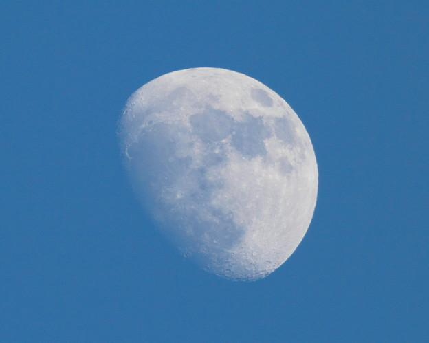 写真: 師走の月