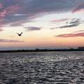 写真: 釧路の夕日