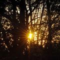 写真: 雑木林の夜明け