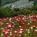 写真: 百段苑の見える場所