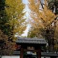 足利学校さままつりの紅葉2014.11.24