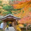 巨蟒橋(きょもうきょう)の秋