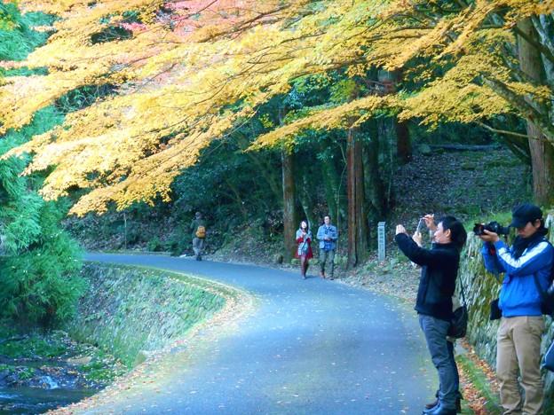 紅葉または黄葉のもみじ街道を行く。