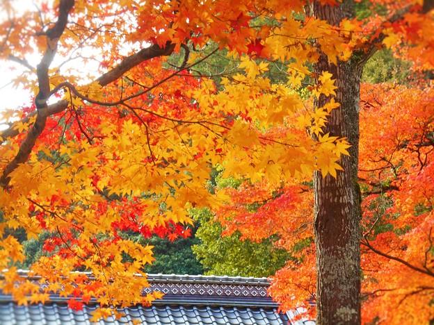 長松院の紅葉