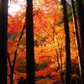 Photos: 備後路の燃える秋