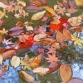Photos: 錦秋の崑崗(こんこう)池