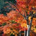 写真: 薬師堂の秋