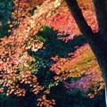 写真: 晩秋の光に揺れる~佛通寺~