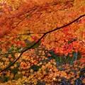 写真: 備後路の秋~佛通寺~