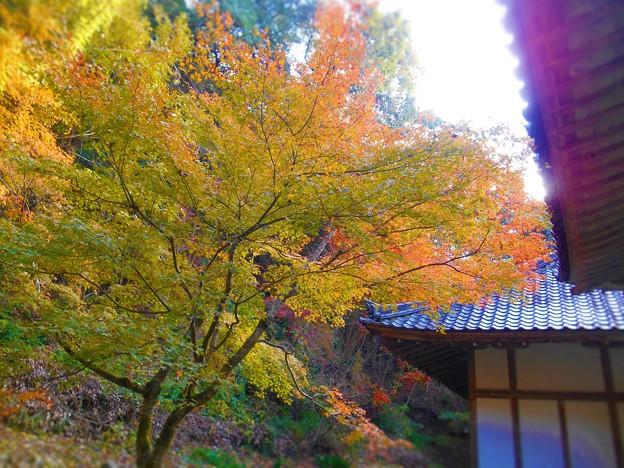 写真: 備後路 開山堂の秋
