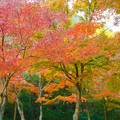 写真: 備後路の秋~仏通寺~