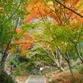 写真: 開山堂の秋 含暉坂の紅葉