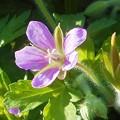写真: 野の花シリーズ3@久山田水源池