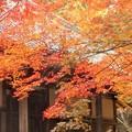 写真: 開山堂の紅葉@備後路・佛通寺