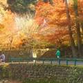写真: 深山幽谷@永徳院の秋