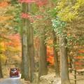 写真: 杉木立の紅葉@古刹・佛通寺