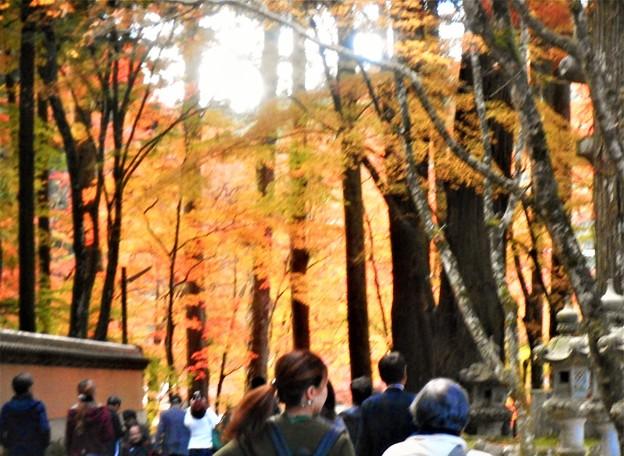 Photos: 杉木立の紅葉@参道の秋@大本山・佛通寺