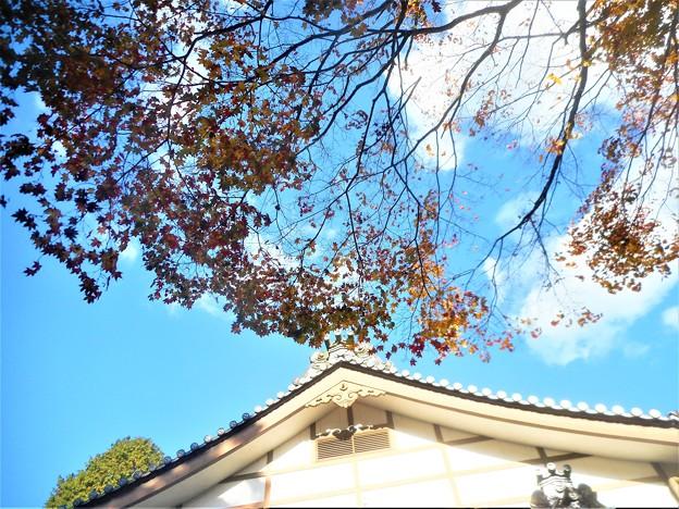 Photos: 鳳林閣(ほうりんかく)の秋@佛通寺