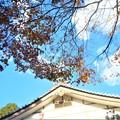 写真: 鳳林閣(ほうりんかく)の秋@佛通寺