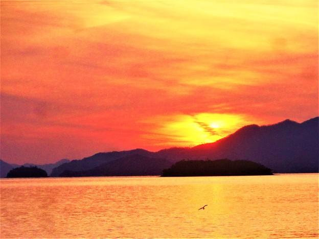 クジラ島の夕陽と一羽のカモメ@瀬戸内海 2017/12/30