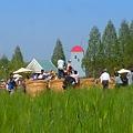 Photos: 麦畑・干し草ロールで遊ぶ~ちびっ子天国~