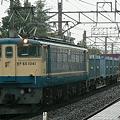 写真: pf1041-20090831