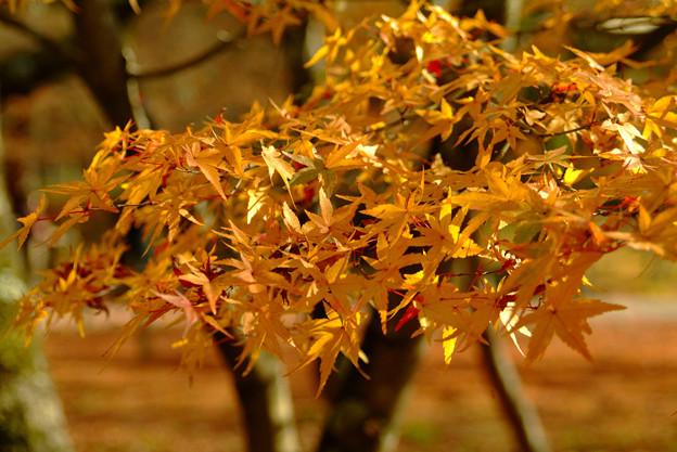 南禅寺の紅葉1