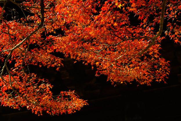 南禅寺の紅葉5