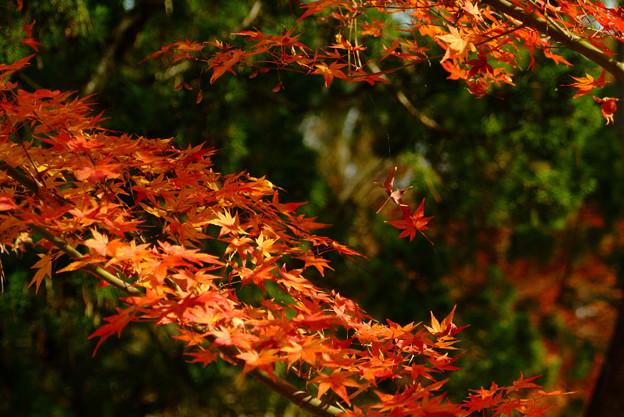 南禅寺の紅葉7