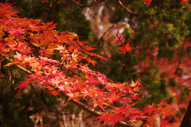 南禅寺の紅葉8