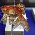 美味しい金魚