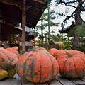 かぼちゃのお寺