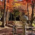 写真: 滋賀鶏足寺の紅葉