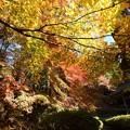 写真: 滋賀 石道寺の紅葉