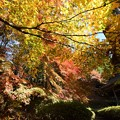 Photos: 滋賀 石道寺の紅葉