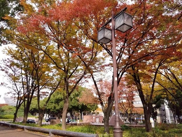 都会のオアシス秋に変わる