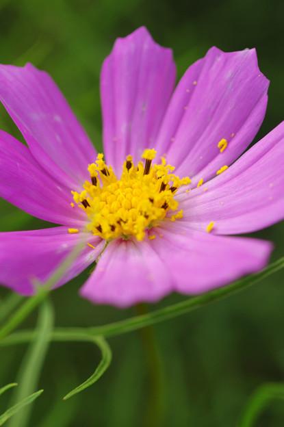 花粉ポロポロ