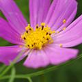 写真: 花粉ポロポロ