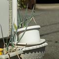 写真: 植木鉢