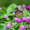 写真: 花壇に集う 2