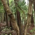 Photos: 自然の造形木
