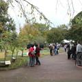 写真: 万葉祭りあいにくの雨で曲水の宴は中止です。