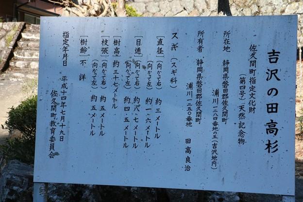 吉沢の田高杉 (よしざわのただかすぎ)