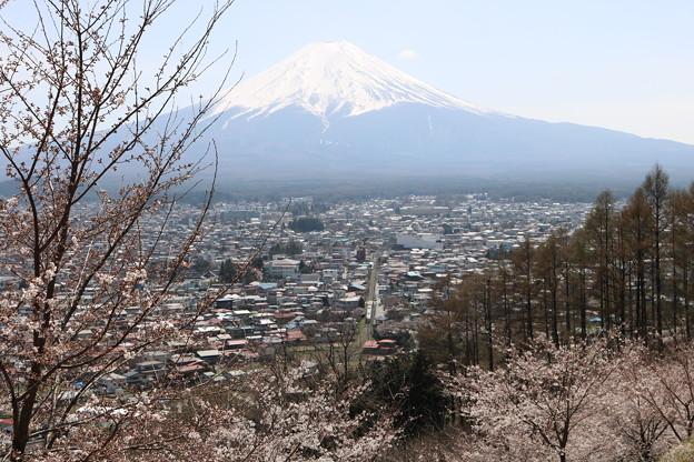 新倉山から富士山を望む