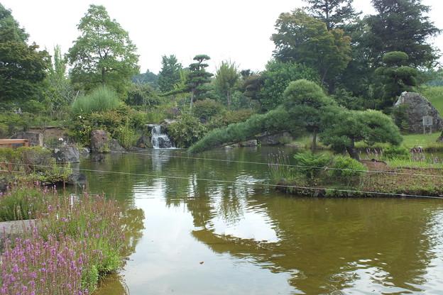 日本庭園 F0365